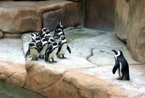 Philosophie im Alltag: Was man im Zoo über das Leben lernen kann