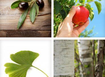 Baum verschenken: Welchen Baum zu welchem Anlass?