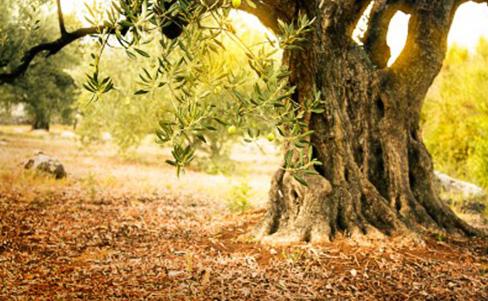 Ein Mann, ein Baum, eine Botschaft