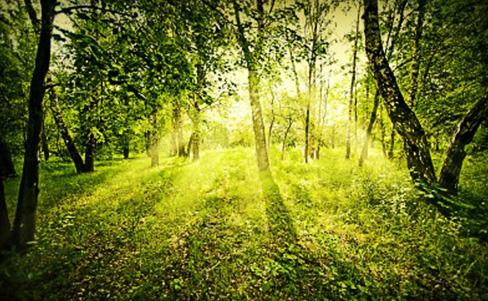 Der grüne Gentleman – Respekt gegenüber der Umwelt