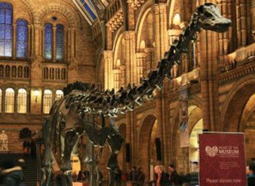 Ein Besuch im Museum: Nicht nur gucken, auch anfassen
