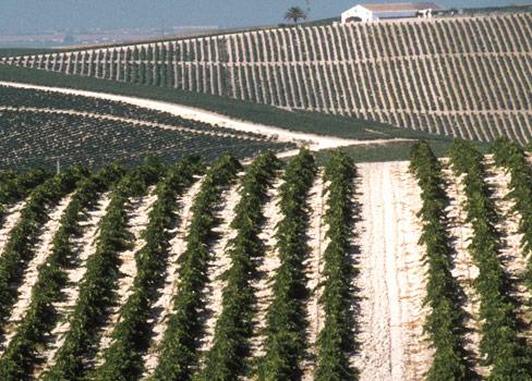 Sherry – die individuellen Weine aus Andalusien